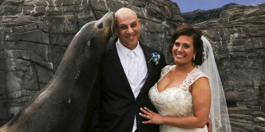 Bride Groom Seal Kiss