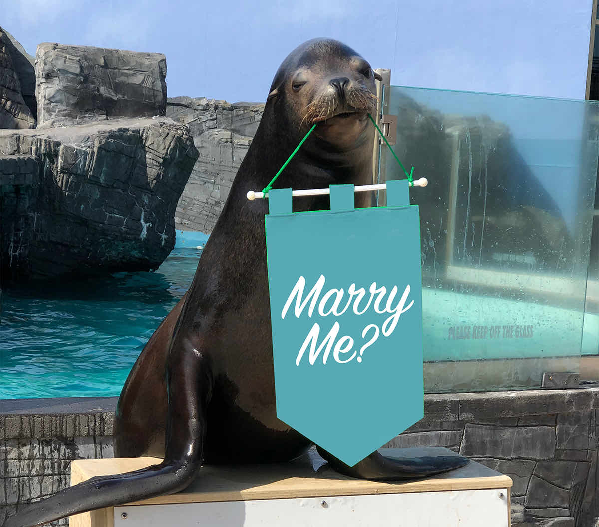 Sea Lion with a Marry Me Banner