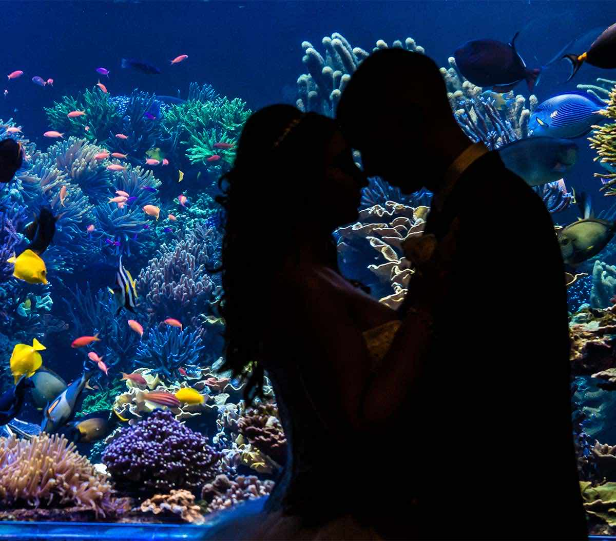 Couple by Coral Reef Tank