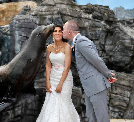 Wedding Couple with Sea Lion
